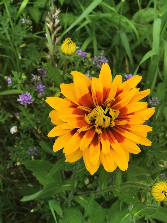 wild flower 10