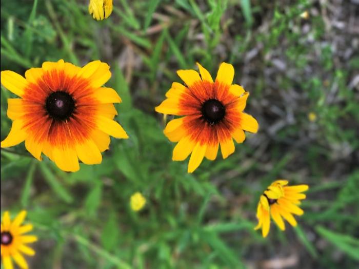 wild-flower-11.jpg