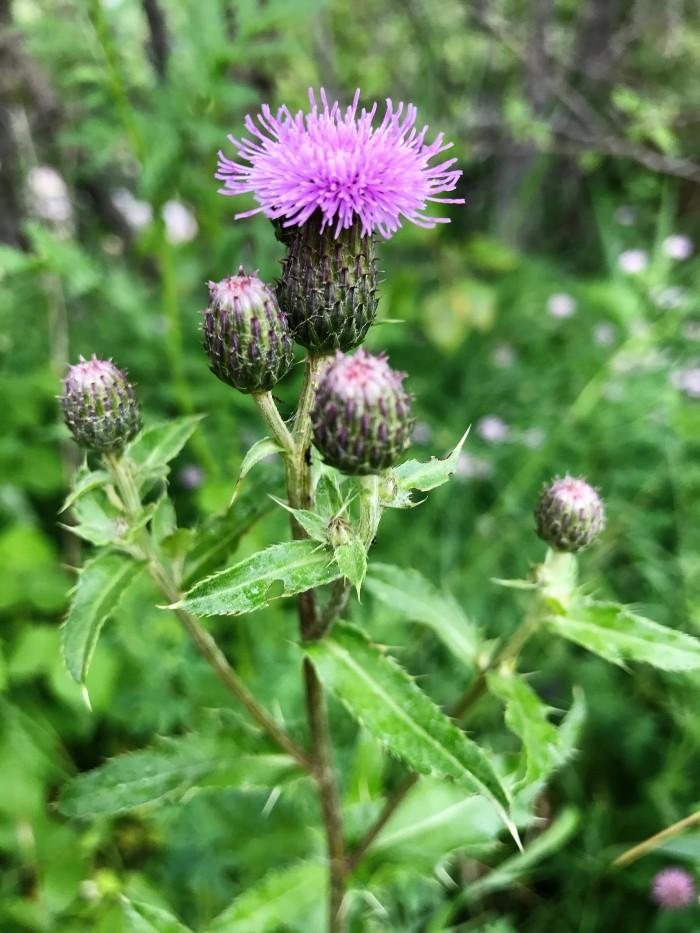 Wild flower 2.jpg