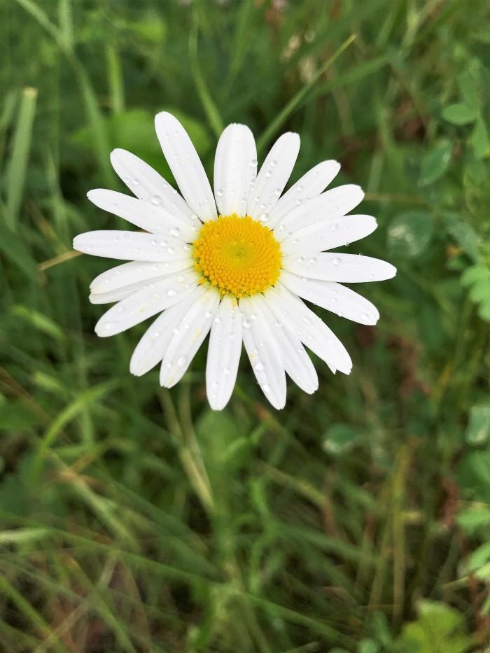wild flower 3.jpg
