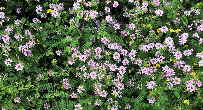 wild-flower-4.jpg