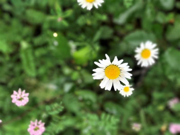 wild flower 5.jpg