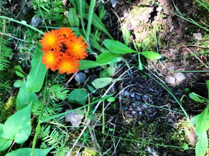 wild flower 7.jpg