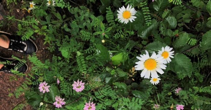 Wild flower header