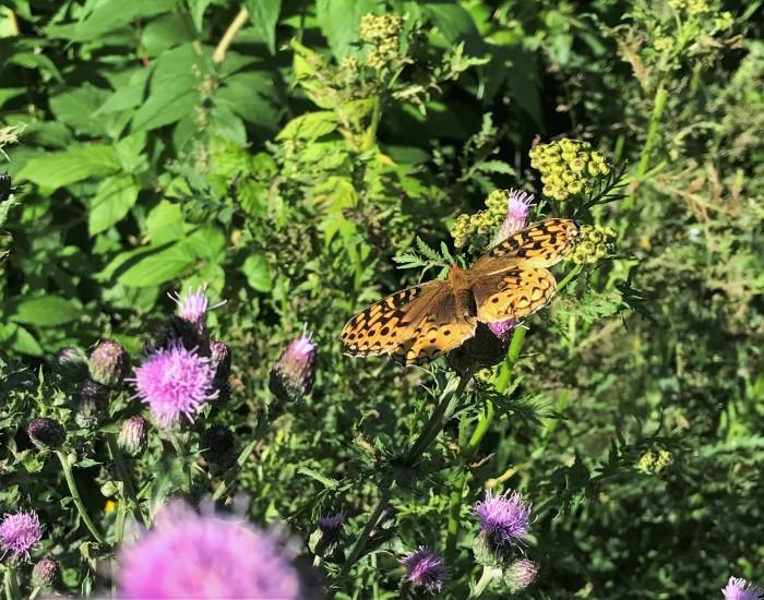 wild flower with moth 2
