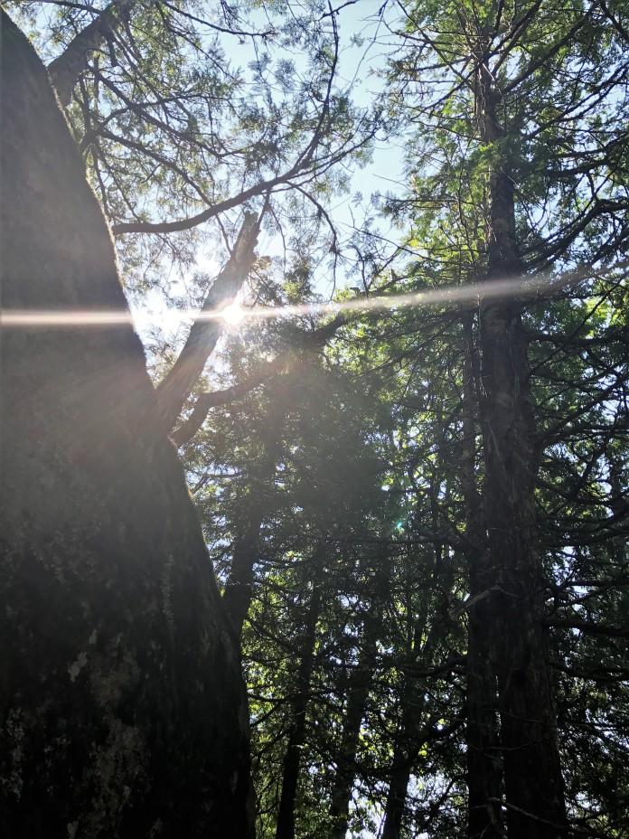 Lutsen Mountains Superior Hiking Trail