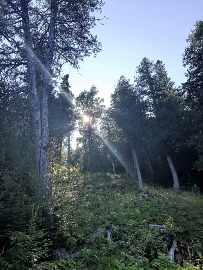 Moose Mountain descent at Lutsen mountains