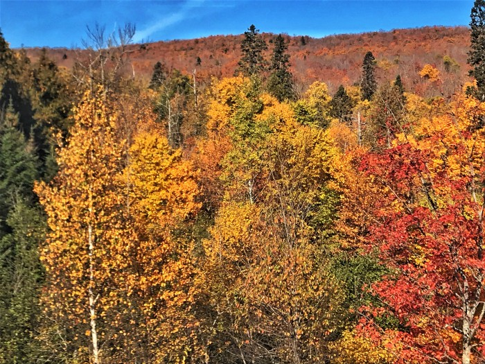 Fall colors on Lutsen Mountains, www.FromLutsenwithLove.com