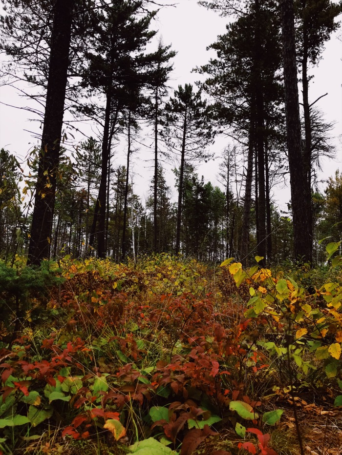 Fall colors near Lutsen MN